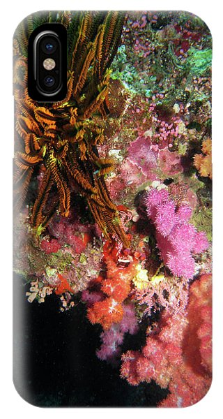 Qld iPhone Case - Coral, Agincourt Reef, Great Barrier by David Wall