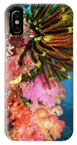 Barrier Reef iPhone Case - Coral Agincourt Reef Great Barrier Reef by David Wall