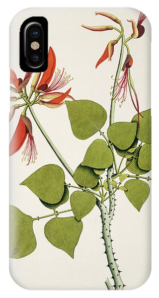 Coral Bean Tree Phone Case by Natural History Museum, London/science Photo Library