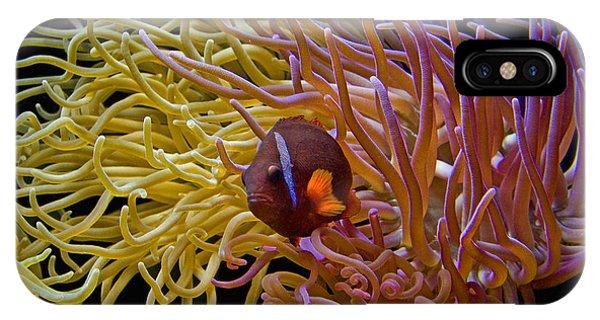 Corals IPhone Case