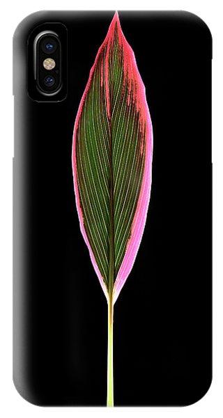 Monocotyledon iPhone Case - Cordyline Fruticosa Leaf by Gilles Mermet