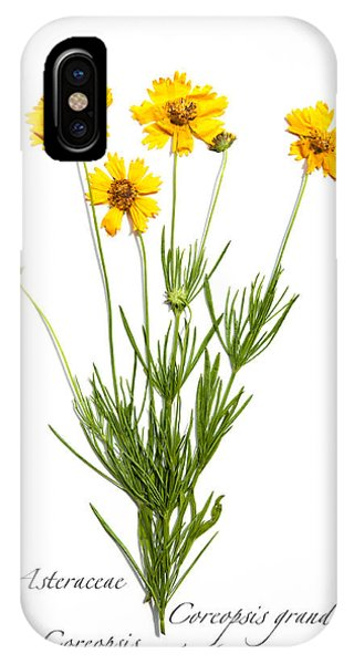 Coreopsis 1 IPhone Case