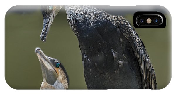 Cormorant Pair Looking At Each Other Lovingly IPhone Case