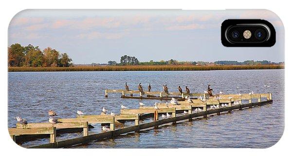 Cormorants And Seagulls On Old Dock Near Blackwater  National Wildlife Refuge Near Cambridge Md IPhone Case