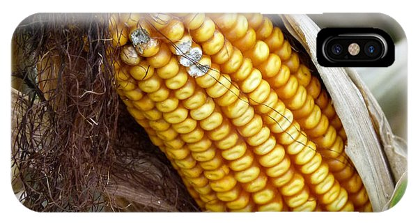 IPhone Case featuring the photograph Corn Cob Dry by Jeff Lowe