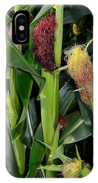 Corn Growing IPhone Case