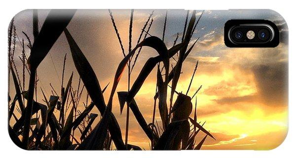 Cornfield Sundown IPhone Case