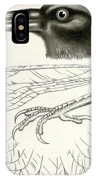 Raven iPhone Case - Corvus Carnivorus, Northern Raven., Suckley by Artokoloro