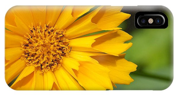 IPhone Case featuring the photograph Coryopsis Auriculata - Coryopsis Jethro Tull by Nature and Wildlife Photography