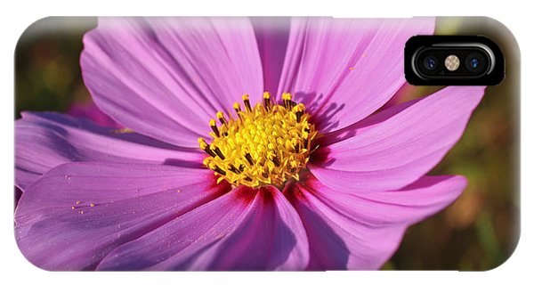 Cosmos Love IPhone Case