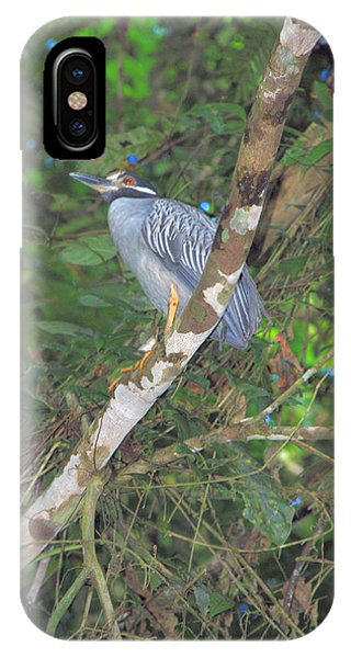 Costa Rica Heron IPhone Case