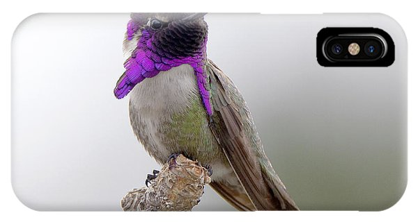 Costa's Hummingbird IPhone Case