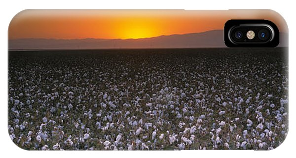 Fresno Silhouette iPhone Case - Cotton Crops In A Field, San Joaquin by Panoramic Images