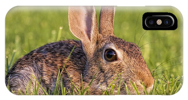 Cottontail IPhone Case