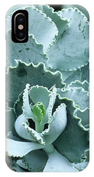 Cotyledon Undulata Foliage Phone Case by Andrew Cowin/science Photo Library