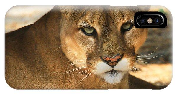 Cougar II IPhone Case