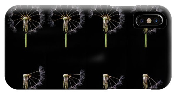 Seeds iPhone Case - Countdown by Art Lionse