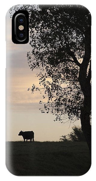 Cow At Last Light IPhone Case