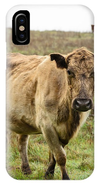 Wheeler Farm iPhone Case - Cow At Tolay Lake by Dan Wheeler