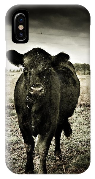 Cow In The Winter Pasture  IPhone Case