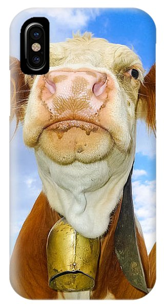 Cow Looking At You - Funny Animal Picture IPhone Case