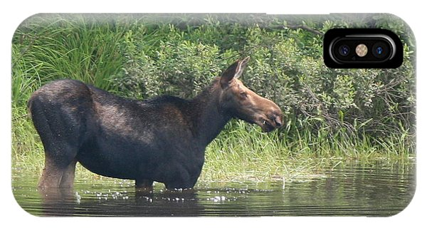 Cow Moose Breakfast IPhone Case