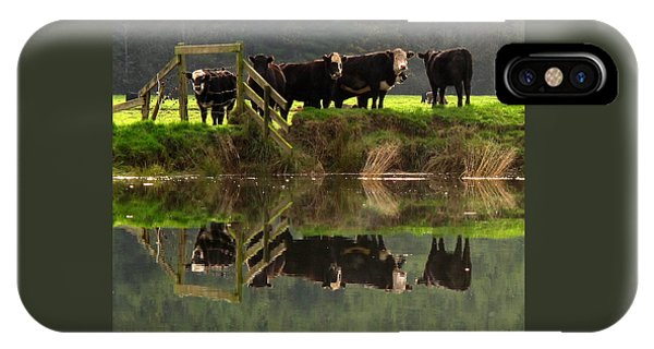 Cow Reflections IPhone Case