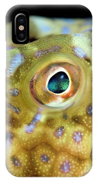 South Pacific Ocean iPhone Case - Cowfish Eye by Scubazoo/science Photo Library