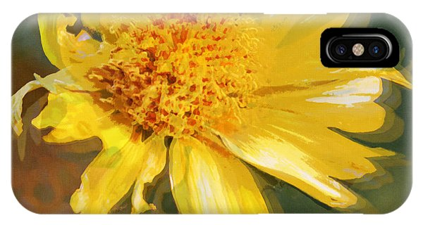 Cowpen Daisy No. 4 IPhone Case