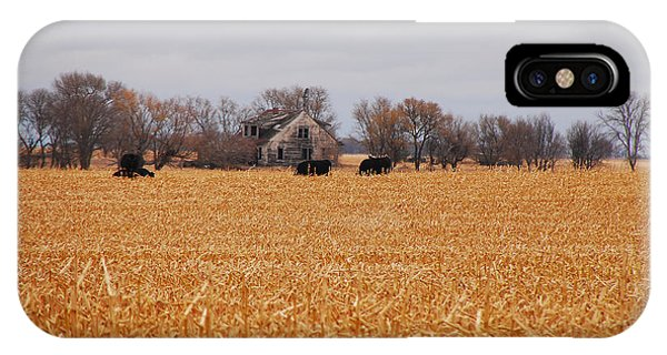 Cows In The Corn IPhone Case