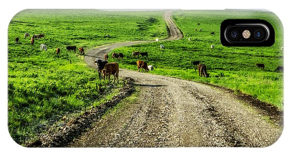 Cows On The Road IPhone Case