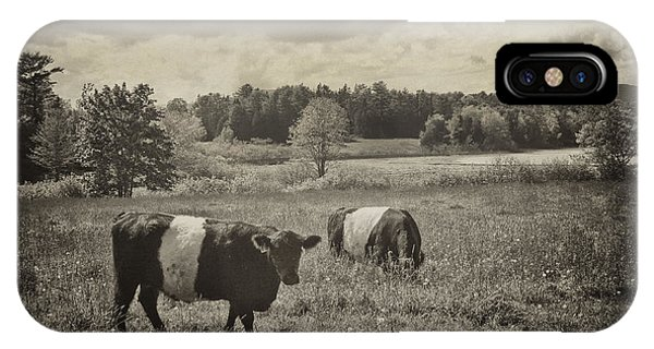 Cows Rockport Maine IPhone Case