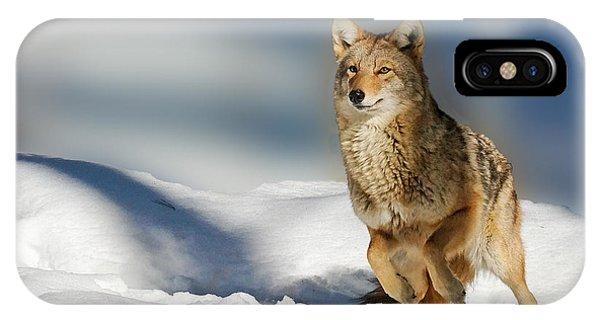 Coyote Go Go Go IPhone Case