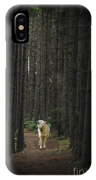 Coyote Howling In Woods IPhone Case