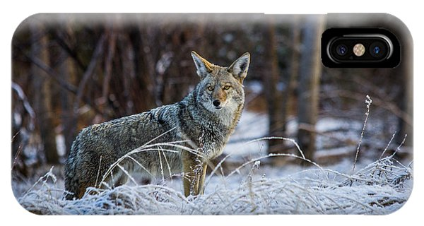 Coyote In The Meadow  IPhone Case