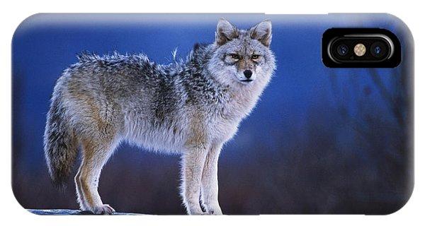 Winter iPhone Case - Coyote Standing On Log Alaska Wildlife by Doug Lindstrand