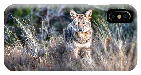 Coyote Stare Down IPhone Case