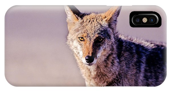Coyote Stares IPhone Case