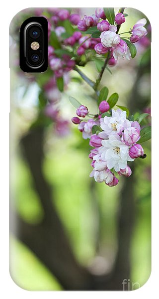 Deciduous iPhone Case - Crab Apple Snow Cloud Tree Blossom by Tim Gainey
