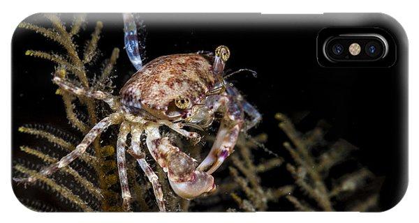 Crab Sitting At Night IPhone Case