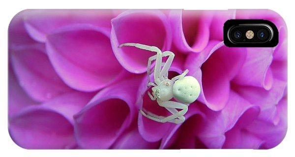 Crab Spider And Dahlia IPhone Case