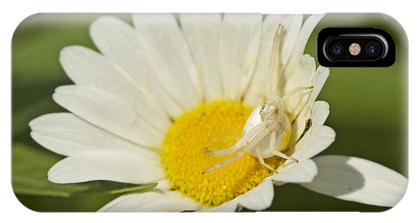 Crab Spider Phone Case by Brian Magnier