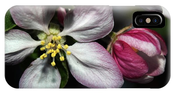Crabapple Blossom IPhone Case