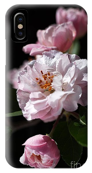 Crabapple Flowers IPhone Case