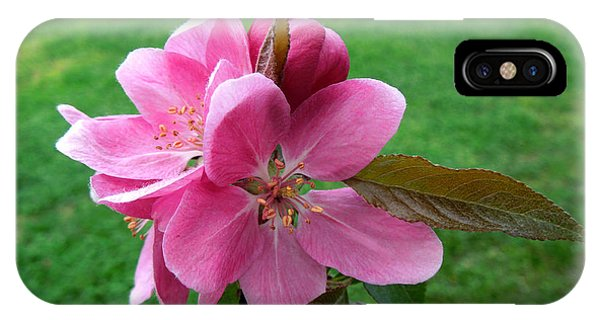 Crabapple Portrait IPhone Case