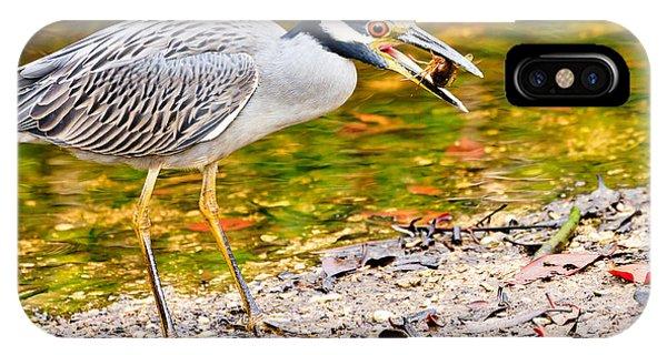 Crabbing In Florida IPhone Case