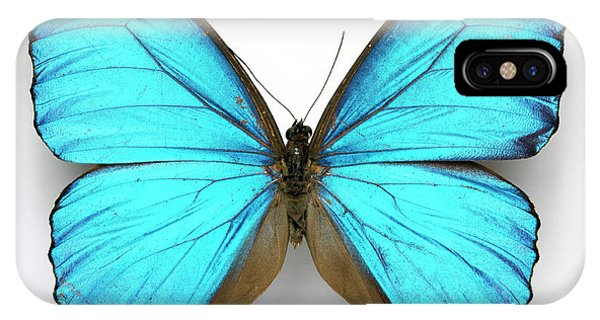 iPhone Case - Cramer's Blue Butterfly by Natural History Museum, London/science Photo Library