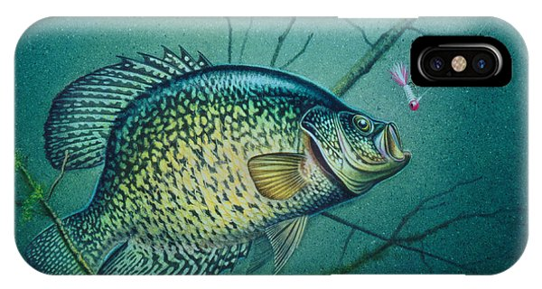 Crappie And Pink Jig IPhone Case