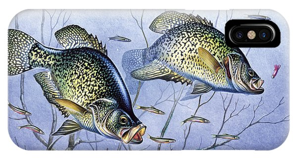 Ice iPhone Case - Crappie Brush Pile by JQ Licensing