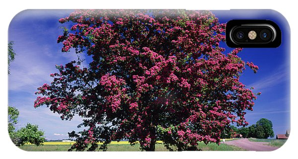 Crataegus Intricata. Phone Case by Bjorn Svensson/science Photo Library